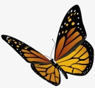 293-2936039_monarch-butterfly-transparent-background